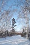 冬天电路在森林里 免版税库存图片