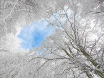 冬天白色机盖 库存图片