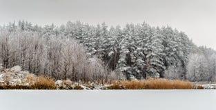 冬天的传说、重的积雪的树和房子derevne的 乌克兰纳 库存图片