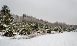 冬天的传说、重的积雪的树和房子derevne的 乌克兰纳 库存照片