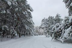冬天的传说 免版税库存照片