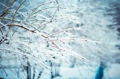 冬天的传说 免版税库存图片