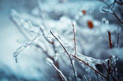 冬天的传说 免版税图库摄影