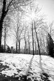 冬天的太阳 库存照片