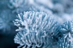 冬天的接近的霜云杉结构树 免版税库存图片