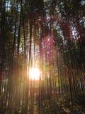 冬天的气味在竹森林里 免版税库存照片