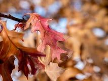冬天的秋天 免版税库存照片