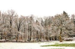 冬天的第一个标志 图库摄影