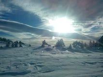 冬天的野生性 库存图片
