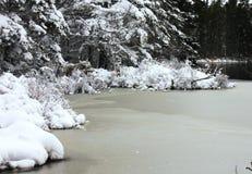 冬天的,场面,风景 免版税库存照片