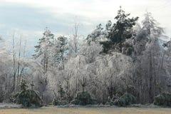 冬天秀丽 库存图片