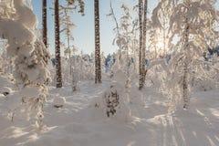 冬天积雪的木头。 库存照片