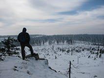 冬天积雪的树在森林里 免版税库存照片