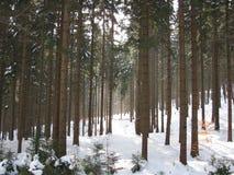 冬天积雪的树在森林里 免版税库存图片