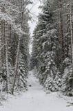 冬天积雪的树 图库摄影