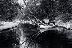 冬天积雪的森林和小河 免版税库存图片