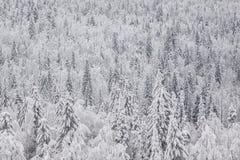 冬天积雪的森林在俄罗斯 免版税库存图片