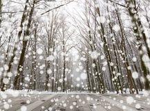 冬天积雪的森林秀丽自然ba木地板  免版税库存图片