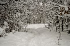 冬天积雪的森林美妙的风景在大雪以后的 免版税库存照片
