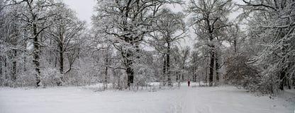 冬天积雪的森林美妙的风景在大雪以后的 图库摄影