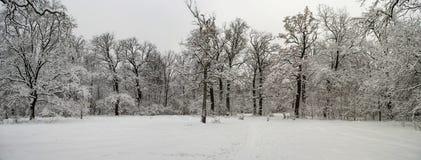 冬天积雪的森林美妙的风景在大雪以后的 库存照片
