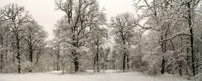 冬天积雪的森林美妙的风景在大雪以后的 免版税库存图片