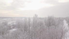 冬天积雪的森林,鸟` s眼睛视图 股票录像