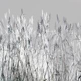 冬天秸杆 免版税图库摄影