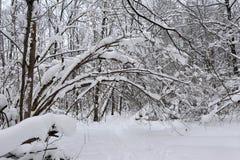 冬天童话在森林里 库存图片