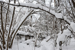 冬天童话在森林里 免版税库存图片