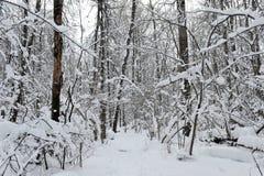 冬天童话在森林里 库存照片
