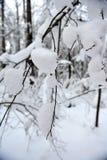 冬天童话在森林里 免版税库存照片