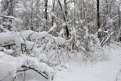 冬天童话在森林里 图库摄影