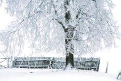 冬天简单派。 库存照片