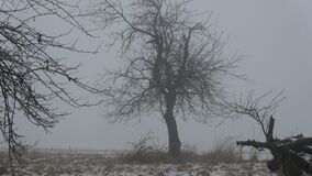 冬天结尾黑暗的早晨薄雾在遗弃庭院里 股票录像
