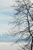 冬天结构树和在雾的阿尔卑斯山 库存图片