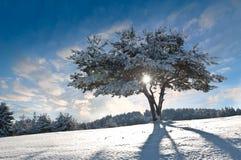 冬天结构树II 免版税库存图片