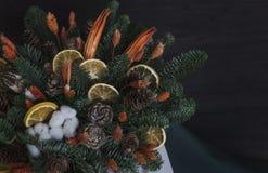 冬天结构的冷杉分支,干桔子,棉花和 图库摄影