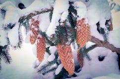 冬天结构的锥体 云杉的爆沸洒与雪 在雪下的冷杉球果 库存图片