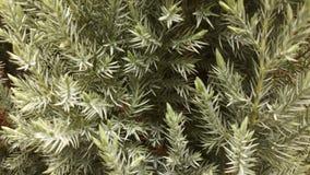 冬天绿色树 库存图片