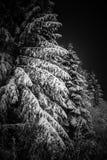 冬天罗马尼亚人夜 图库摄影
