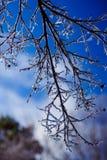 冬天肢体 图库摄影