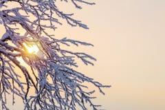 冬天背景-反对阳光的结冰的分支 免版税库存照片