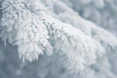 冬天背景-白色冷淡的冷杉分支 免版税库存照片