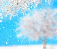 冬天背景 库存图片