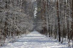 冬天胡同在森林里 免版税库存图片