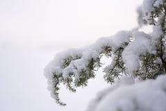 冬天自然照片 免版税库存照片