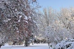 冬天自然的圣诞节装饰-在t的积雪的树 图库摄影