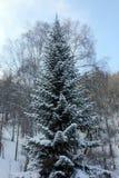 冬天自然西伯利亚人taiga 库存图片