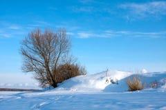 冬天自然,偏僻的树 库存照片